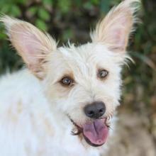 Medium Mixed Breed Dog Info