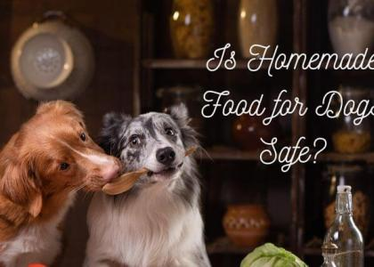 Is Homemade Food for Dogs Safe?