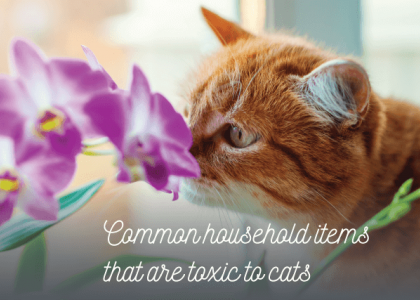 Household Items Toxic To Cats
