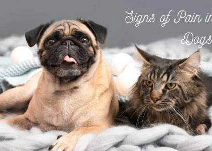 Signs of Pain in Cats and Dogs